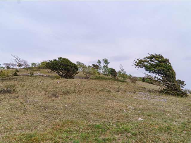 Trees on Arnside Knott
